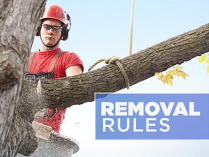 Tree Removal Rules