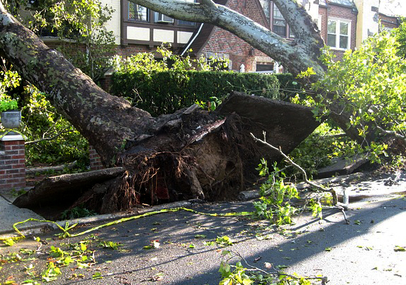 Storm CleanUp - Fallen Trees